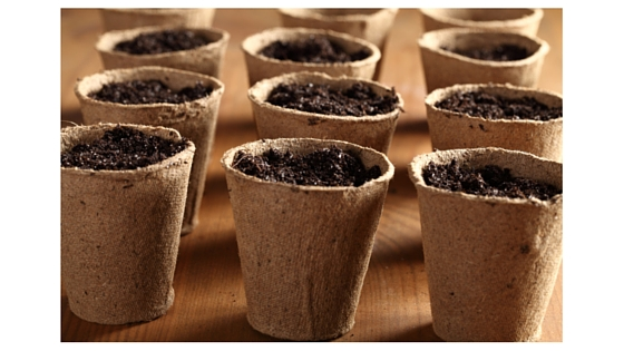 garden pots for seedlings