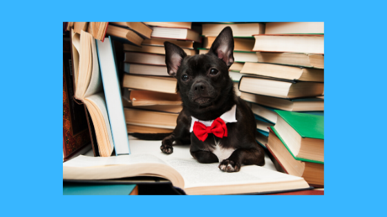 Dog surrounded by books